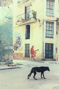 2nd Nov 2019 - It's a dog's life in Havana