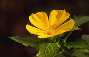 2nd Nov 2019 - Another Yellow Flower!