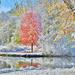 First Snow by lynnz
