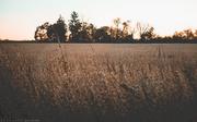 1st Nov 2019 - pasture