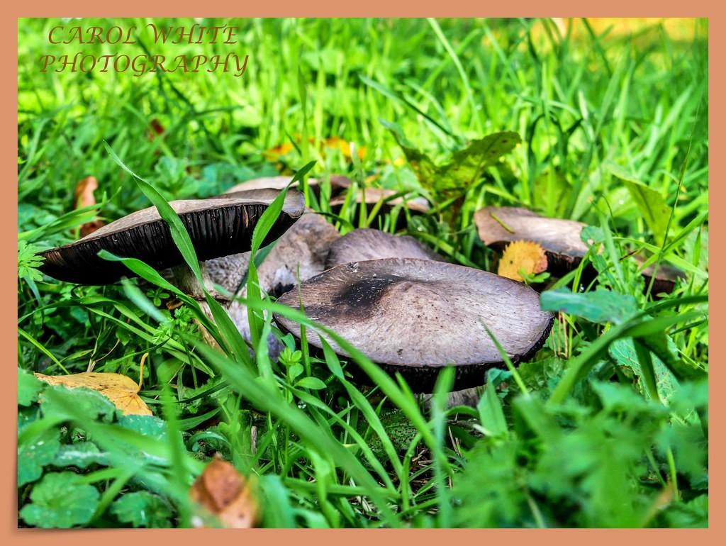 Fungi by carolmw