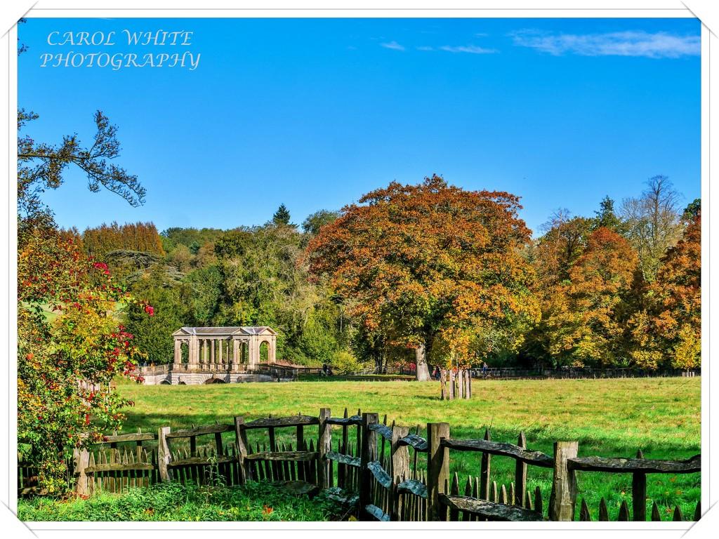 Rustic Fence by carolmw