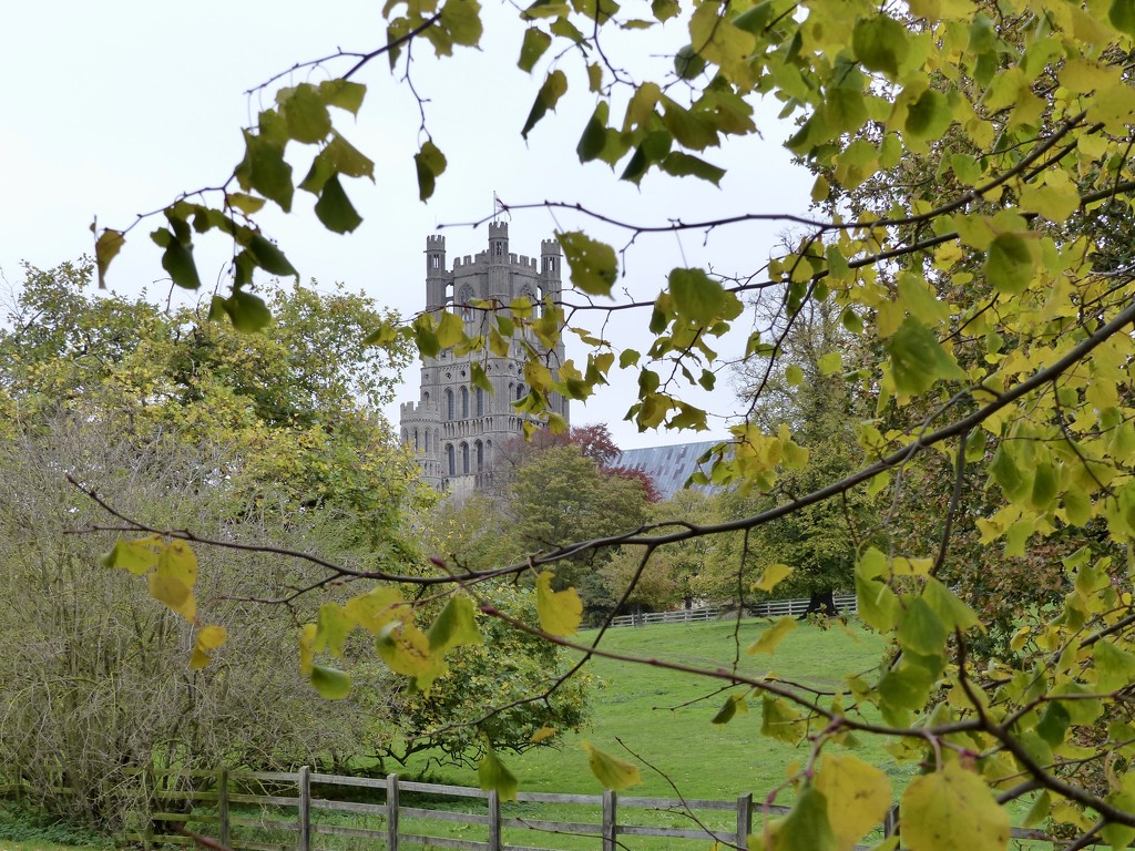 Ely Cathedral from the Meadow by foxes37