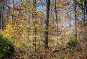 3rd Nov 2019 - Autumn Woods
