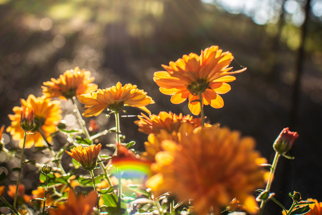 Mums in the sun... by thewatersphotos