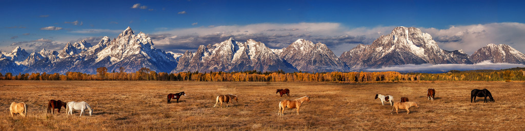 Grazing in the Tetons by exposure4u