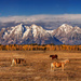 Grazing in the Tetons