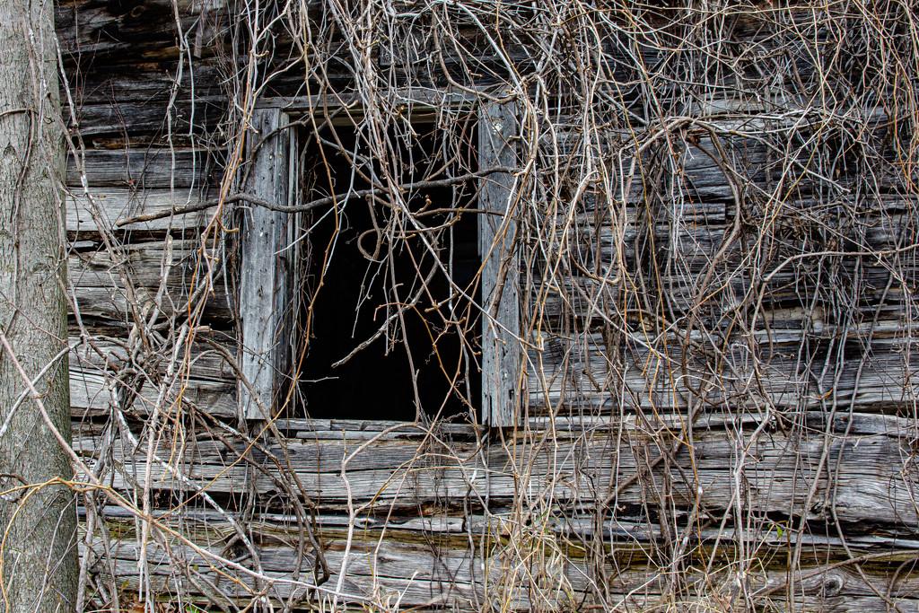 Hidden by farmreporter