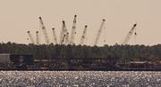 3rd Nov 2019 - Cranes Across the River!