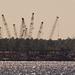Cranes Across the River!