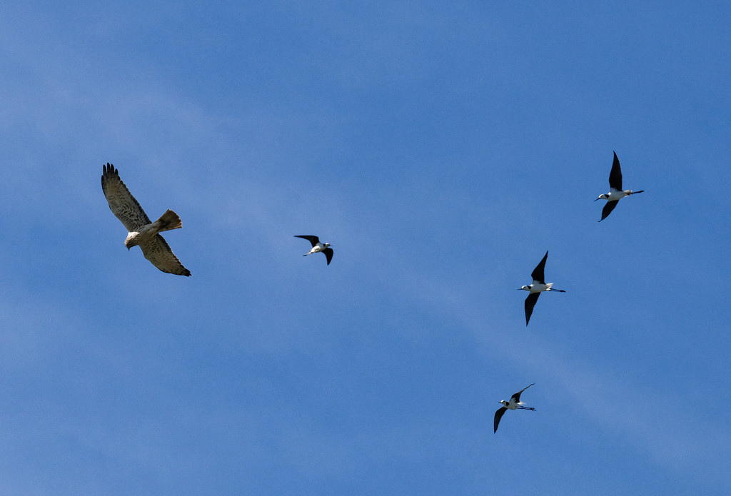 Battle in the air by maureenpp
