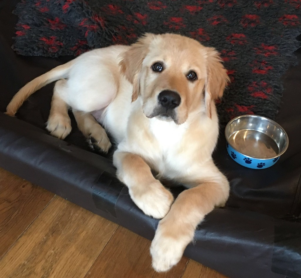 Puppy dog eyes by boogie