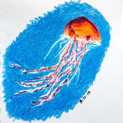 3rd Nov 2019 - Jellyfish