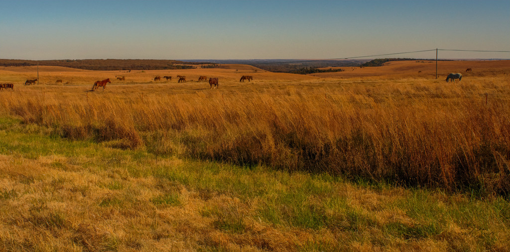 Wild horses in the hills of Osage County  by samae