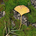 Ginkgo leaf in the moss