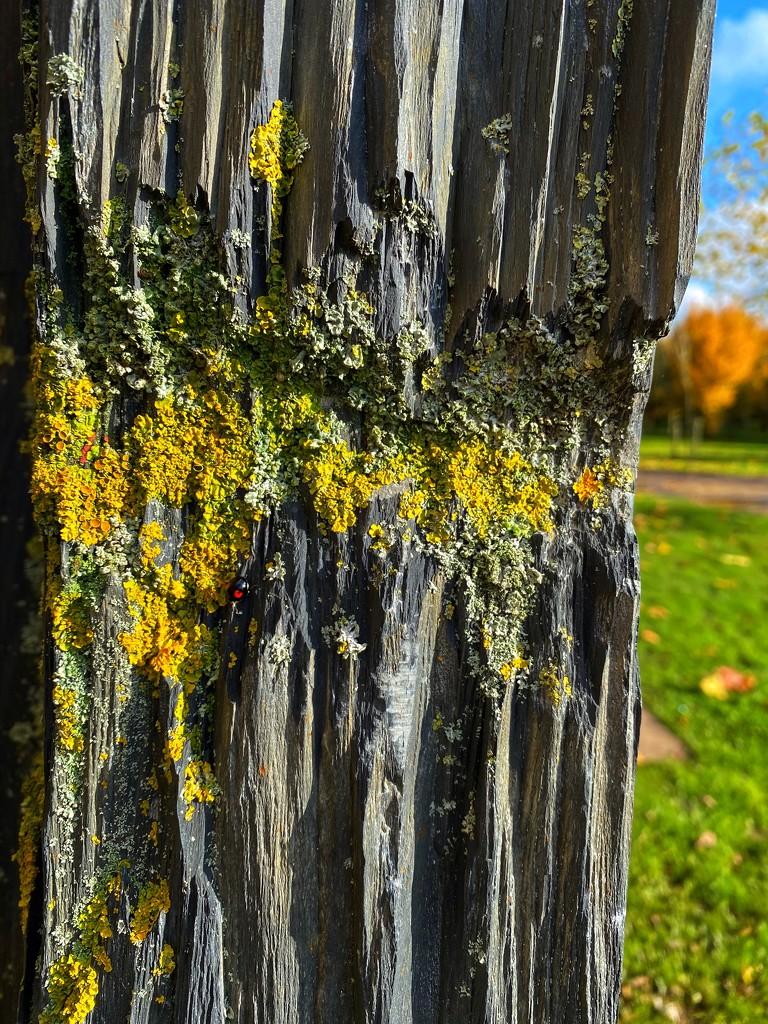 Lichen  by tinley23