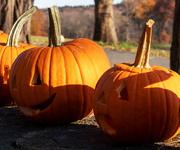 4th Nov 2019 - Pumpkins Past Their Prime