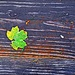 The Last Leaf of Summer