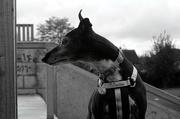 4th Nov 2019 - Ruby at the Skate Park (Industar 50-2 vintage lens)