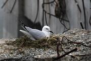 6th Nov 2019 - Nesting site