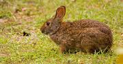 5th Nov 2019 - Bunny Rabbit!