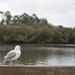 Solitary gull