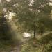 Misty morning by shepherdman
