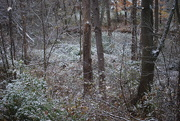 6th Nov 2019 - First snowfall