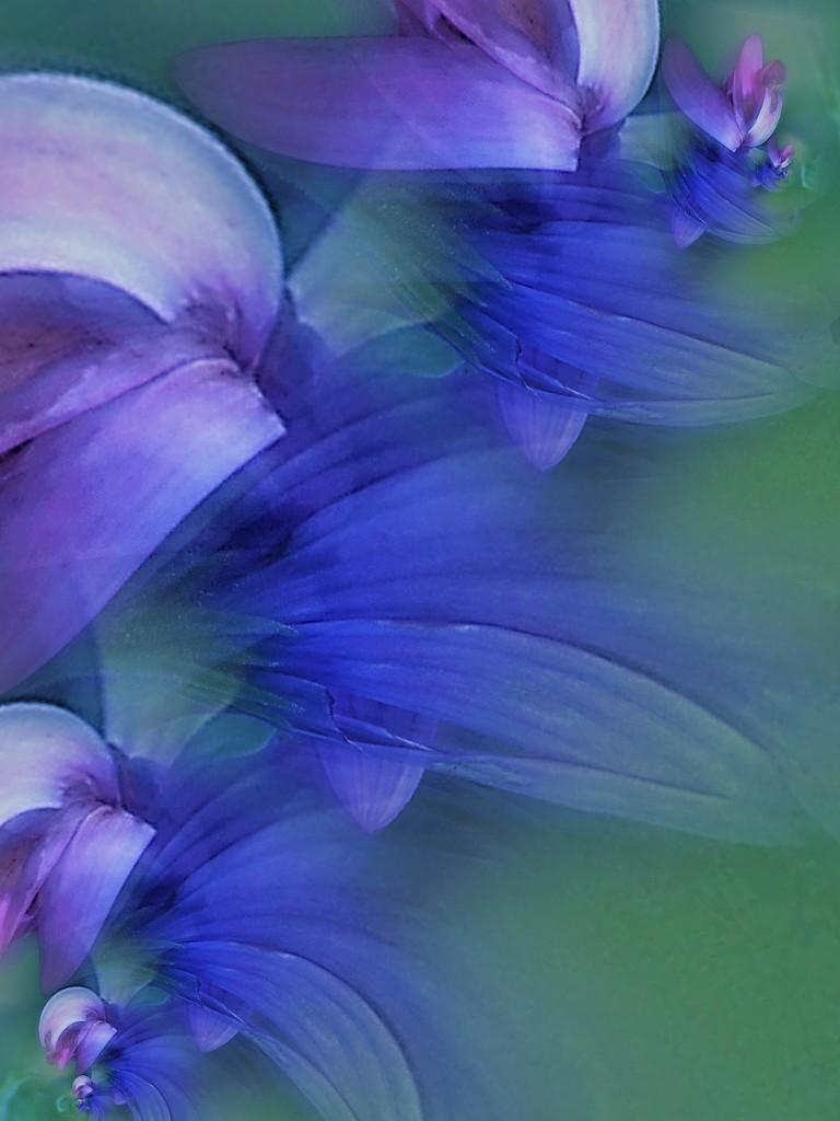 Feeling blue........ by ziggy77