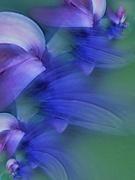 6th Nov 2019 - Feeling blue........