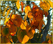 7th Nov 2019 - changing colours