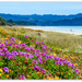 Matarangi Beach Flowers..