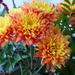 Still Blooming Lovely