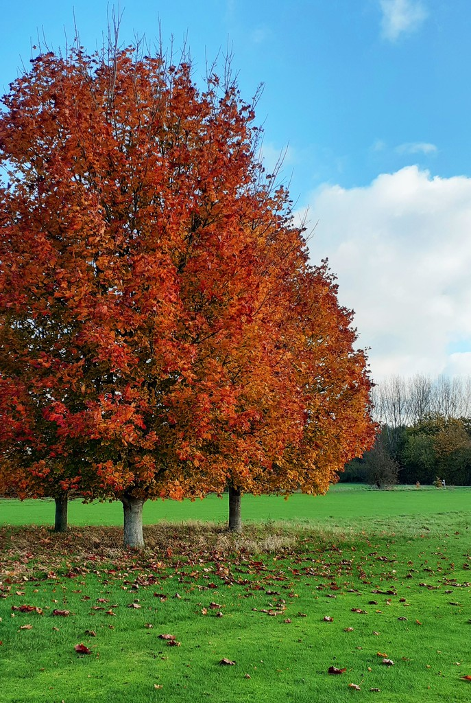 autumn at last ... by ianmetcalfe