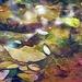 Puddle Wonderful by mzzhope