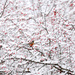 Winter Wonderland! by fayefaye