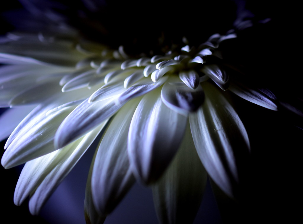 In full bloom.. by jayberg