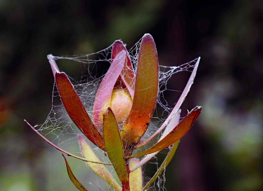 Spider home by maureenpp