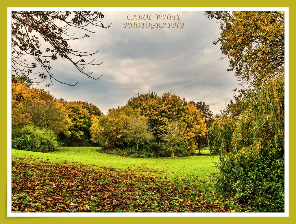 Autumn In The Park by carolmw
