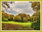 8th Nov 2019 - Autumn In The Park