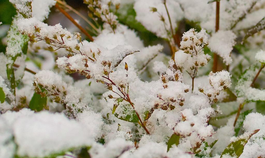 First Snow by gardencat