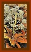 8th Nov 2019 - Autumn Colours !