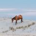 Dune Walker  by lesip