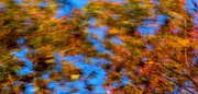 8th Nov 2019 - It's not blurry. It's an abstract.