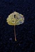 8th Nov 2019 - Fall & Raindrops