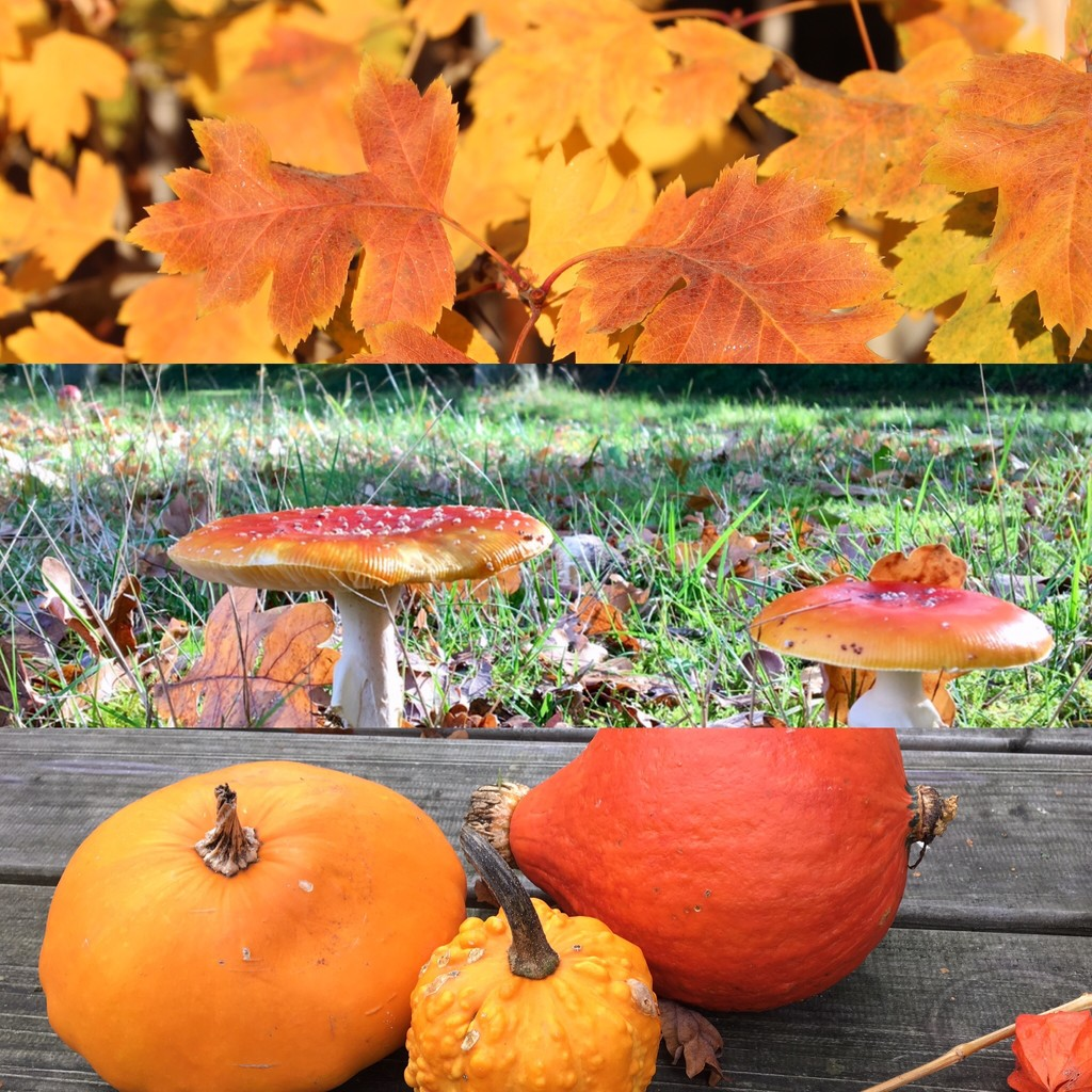 9. Autumn by momamo