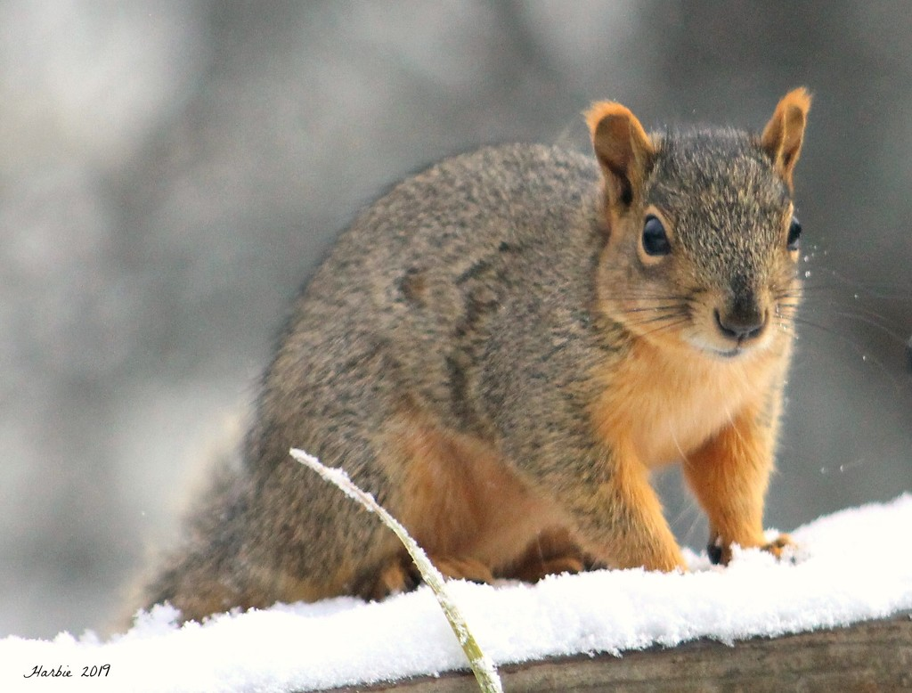 Our Friendly Squirrel by harbie