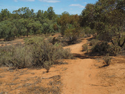 22nd Oct 2019 - Red dust of the outback