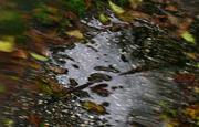 9th Nov 2019 - rainy day