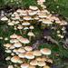 Fungus Village